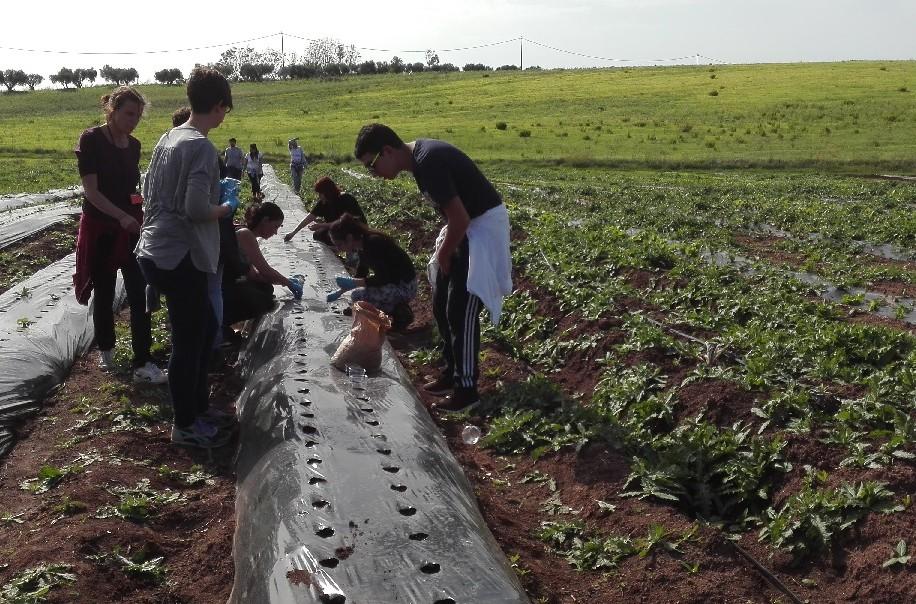 Giornate di Agricoltura Sociale - ogni adolescente con gli operatori a piantare l'aglio nei campi de La Nuova Arca