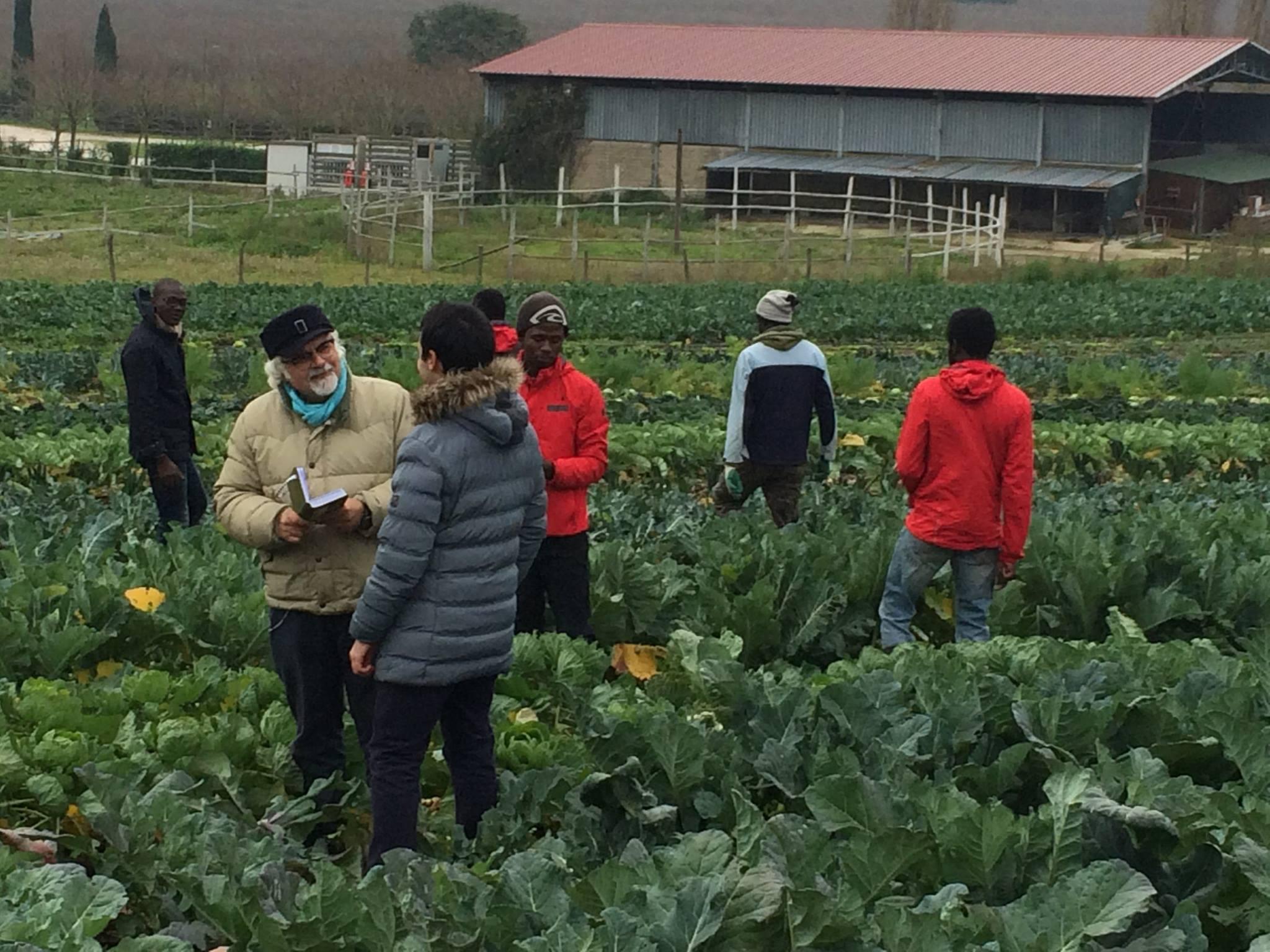 Linea verde parlerà di agricoltura sociale nella puntata che andrà in onda domenica 8 gennaio alle 12:20. Patrizio Roversi sarà al Casale di Martignano per parlarci di Barikamà