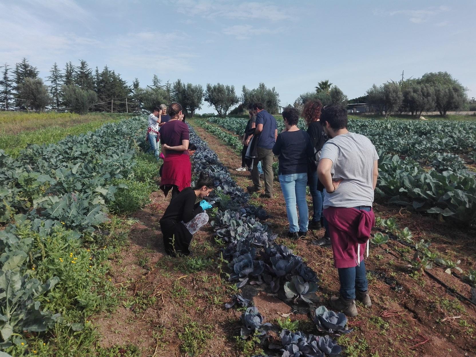 Giornate di Agricoltura Sociale: il giro negli orti, un esempio di cosa si fa in questi appuntamenti