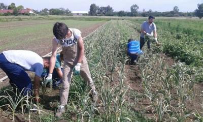 Le attività nell'Azienda agricola D'alesio con Borgo Ragazzi Don Bosco