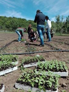 Si inizia a piantare i peperoni