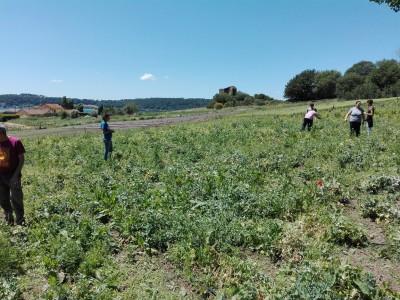 Attività di agricoltura sociale al Casale di Martignano