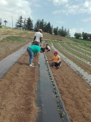 A maggio abbiamo piantato i fagiolini biologici de La Nuova Arca