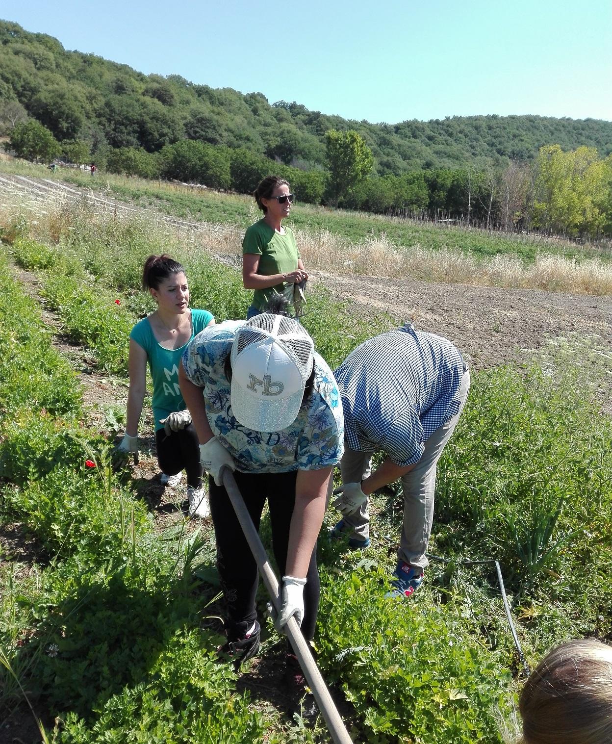 Agricoltura sociale al Casale di Martignano. Iniziamo l'estate cominciando nuovi percorsi