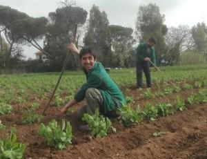 Cos'è l'Agricoltura Sociale?