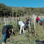 Raccogliamo gli ultimi pomodori del Casale di Martignano