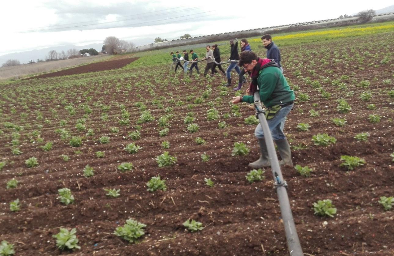 Fare rete in agricoltura sociale significa avere una responsabilità comune