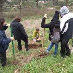 La preparazione dell'albero da piantare